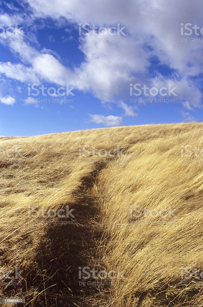 Climbing a Hill in Summer stock photo