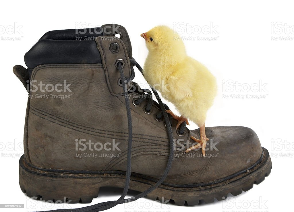 Climbing a shoe royalty-free stock photo