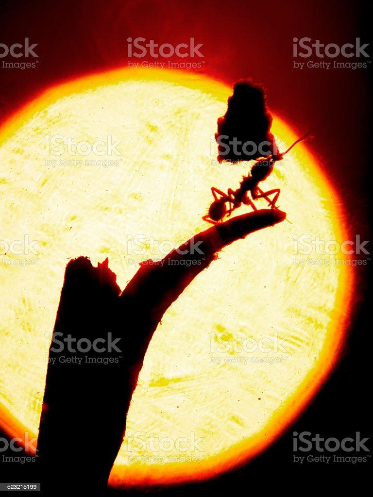 climbing ant stock photo