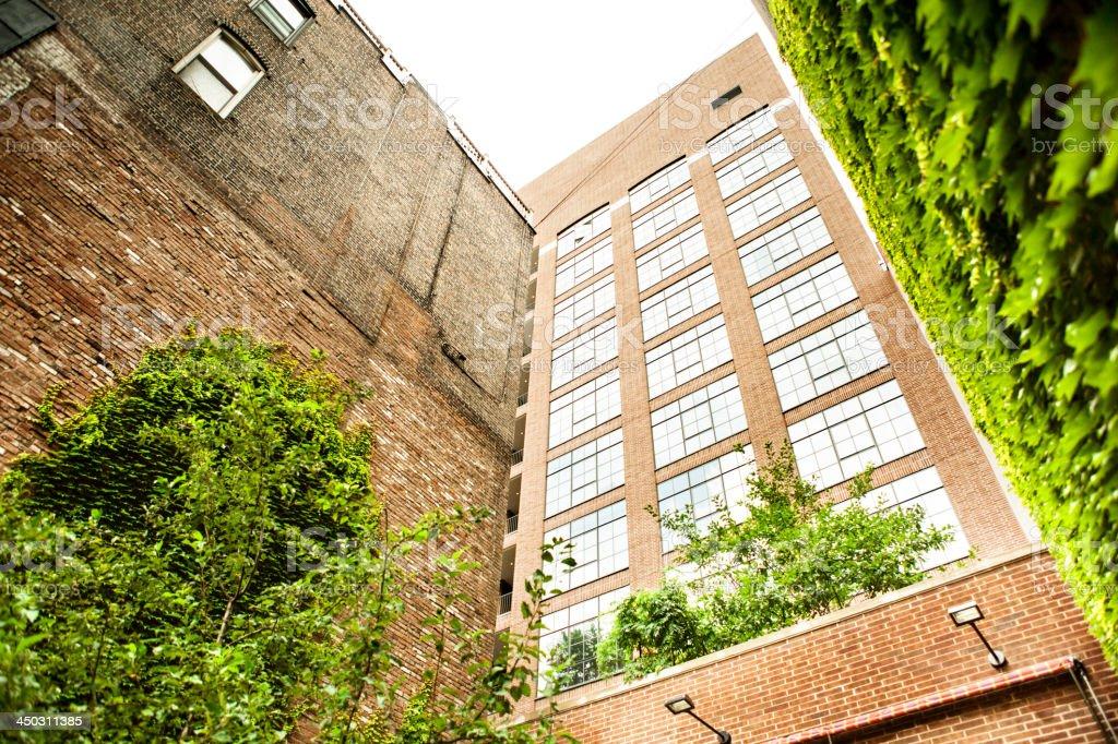 Climbing plants on a brick building royalty-free stock photo