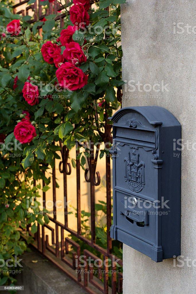 Climbing red rose. Mailbox. stock photo