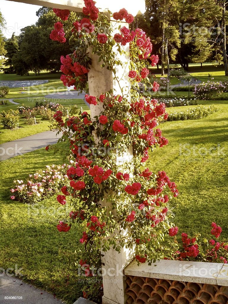Climbing Roses on Gazebo in Parc La Graange Geneva Switzerland stock photo