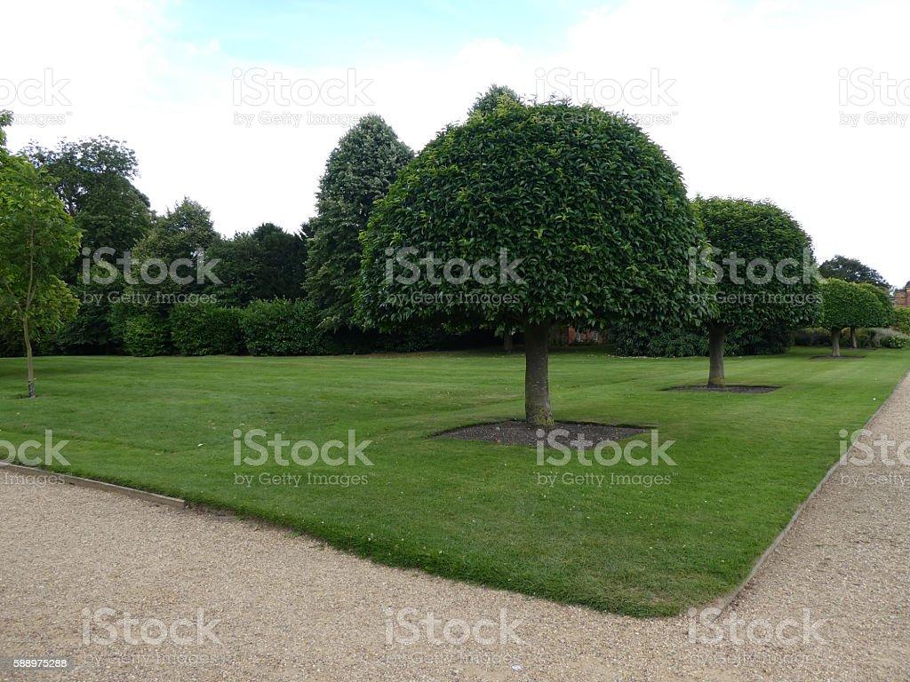 Clipped trees stock photo
