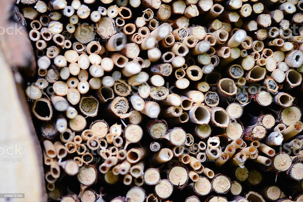 close bee nest in hotel insect shelter stock photo