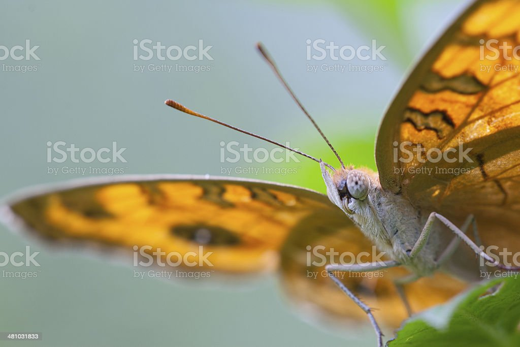 Close Butterfly stock photo