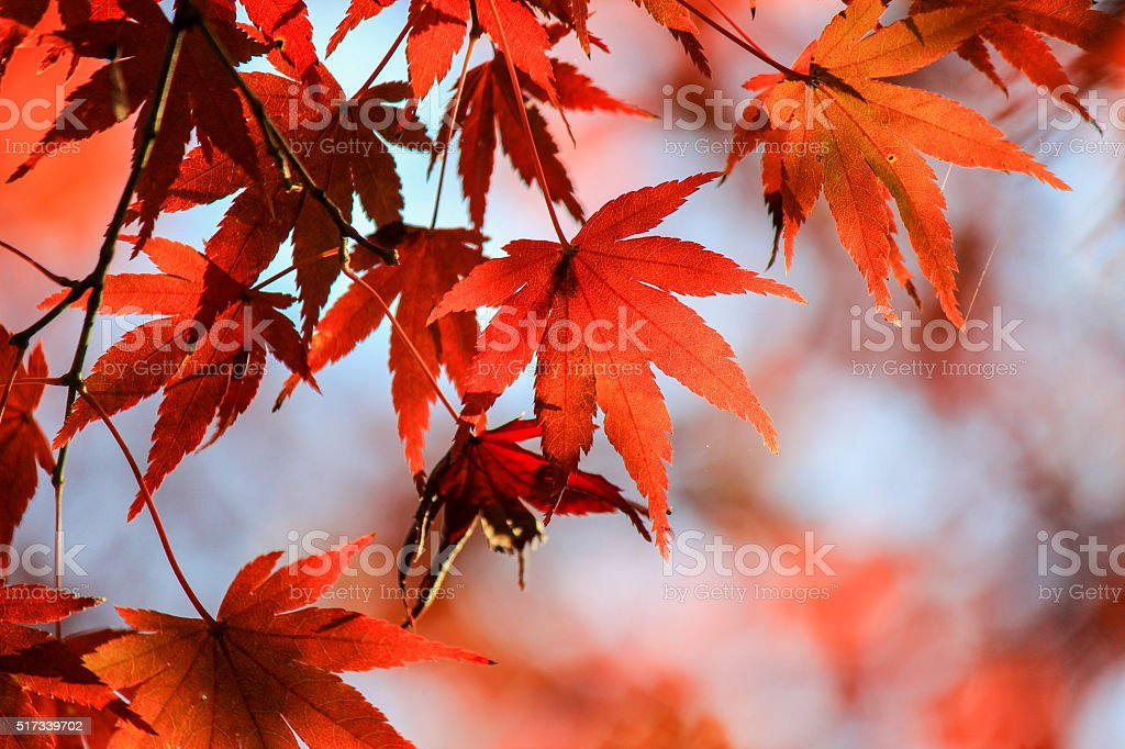 Close up autumn leafs with nature background stock photo