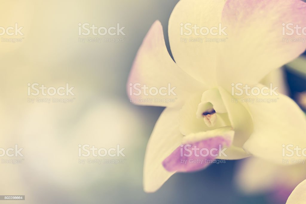 close up beautiful orchids stock photo