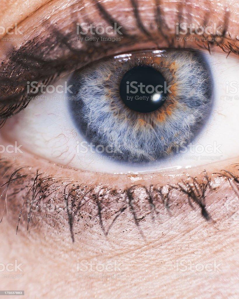 close up beautiful women blue eye whis makeup royalty-free stock photo