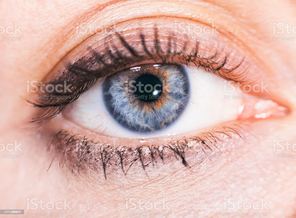 close up beautiful women blue eye whis makeup royalty-free stock photo