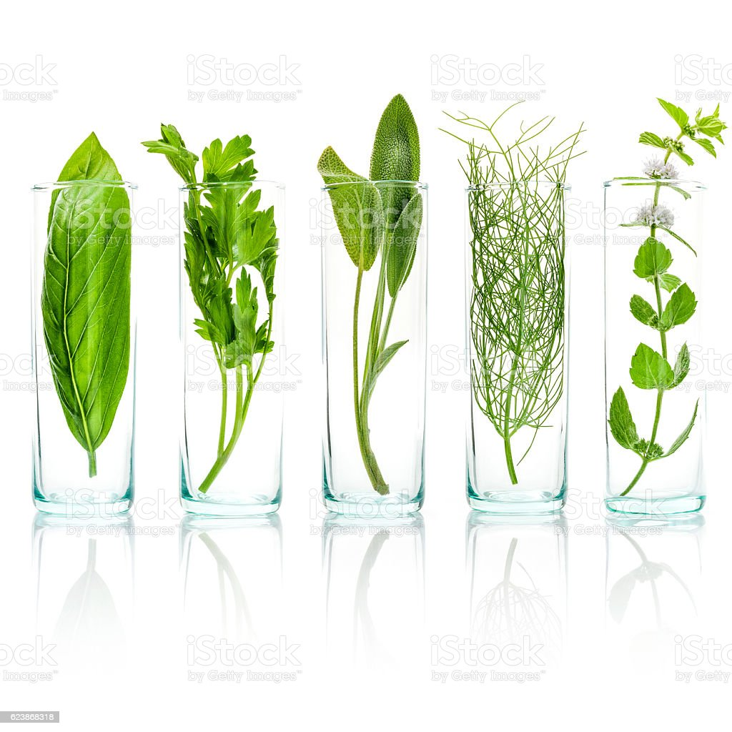 Close Up bottles of fresh aromatic herbs . Fresh sage stock photo
