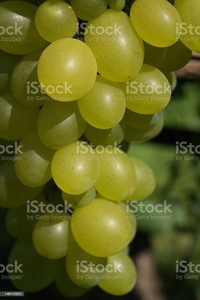 Close up bunch of grapes royalty-free stock photo