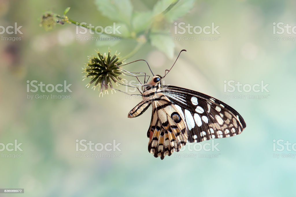 Close up butterfly on flower stock photo