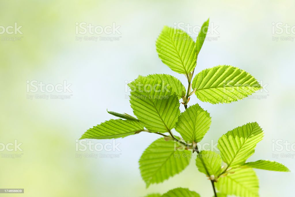 Close up candid of vibrant green leaves in spring royalty-free stock photo