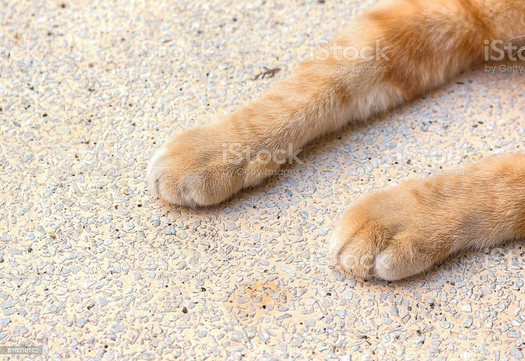 close up cat foot, Cat's paws on Stone table. stock photo