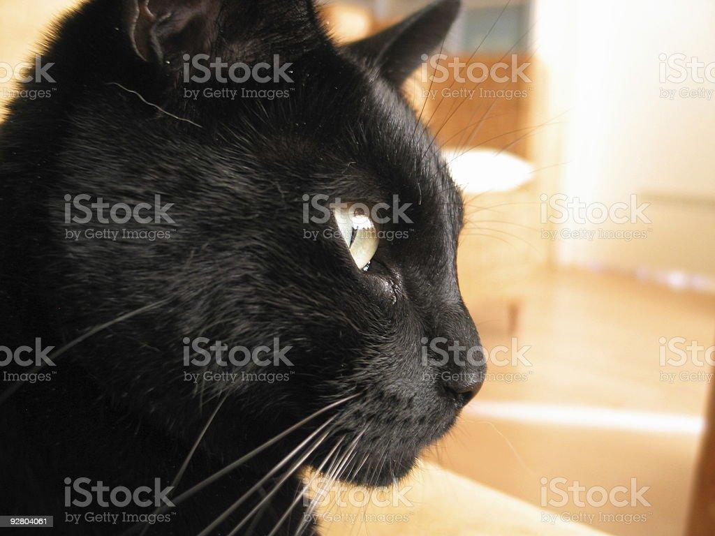 Close up cat royalty-free stock photo