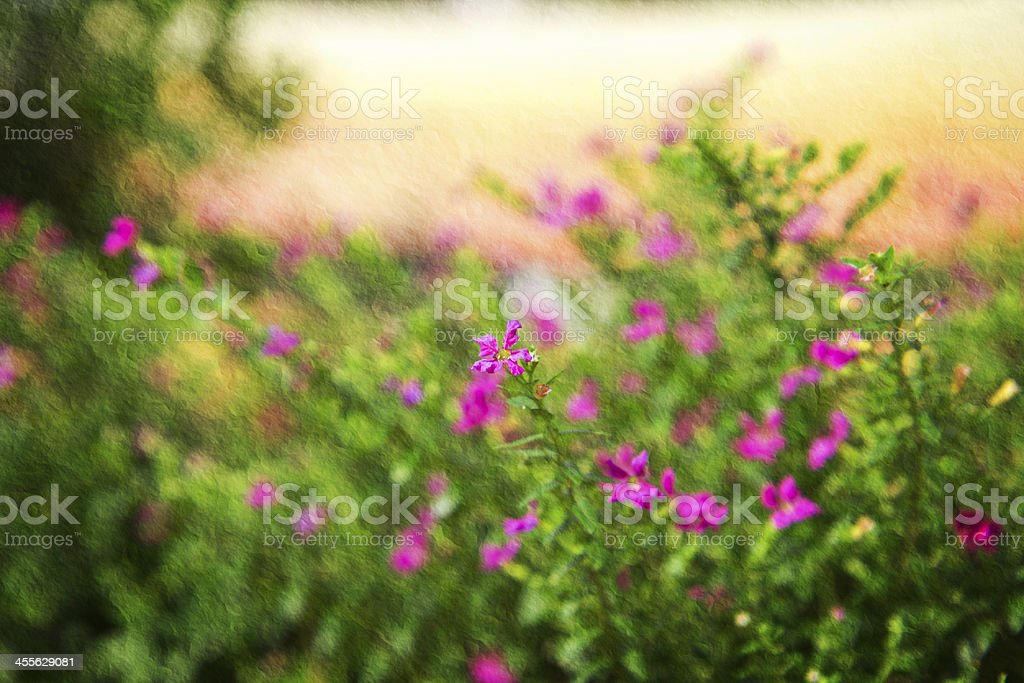 close up colorful False heather plant. royalty-free stock photo