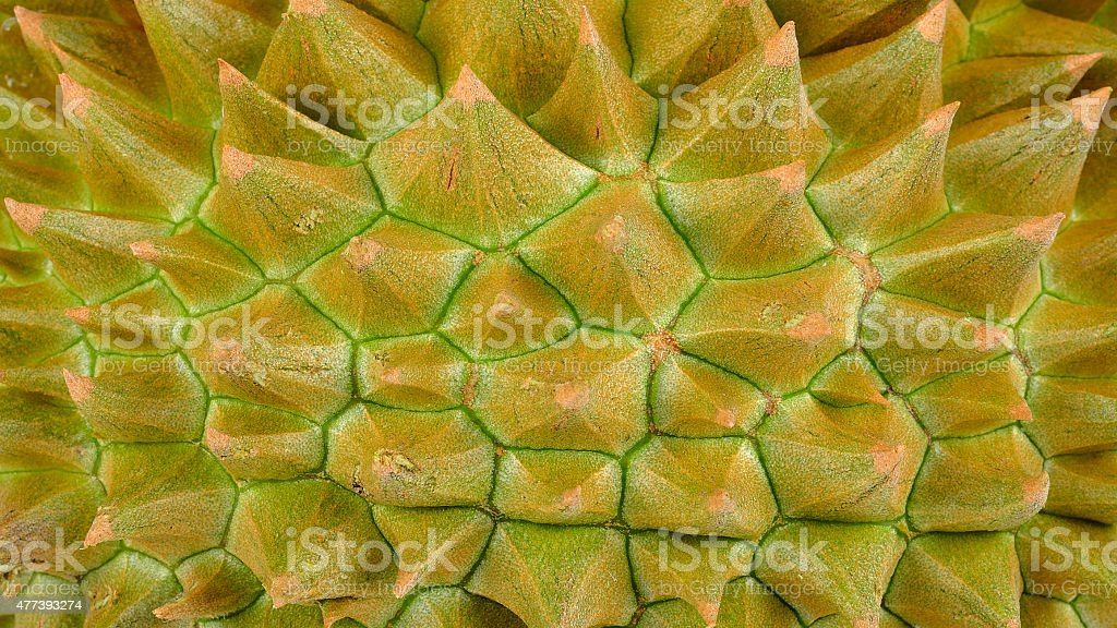 Close up durian for background stock photo