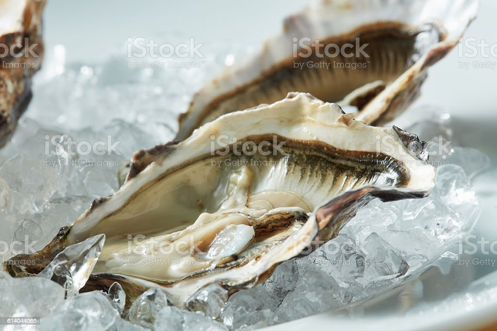 close up fresh raw oyster on a plate stock photo