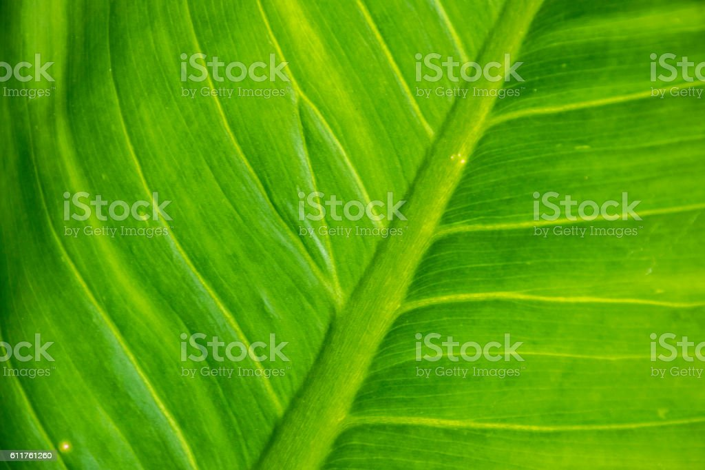 Close up green leaf. stock photo