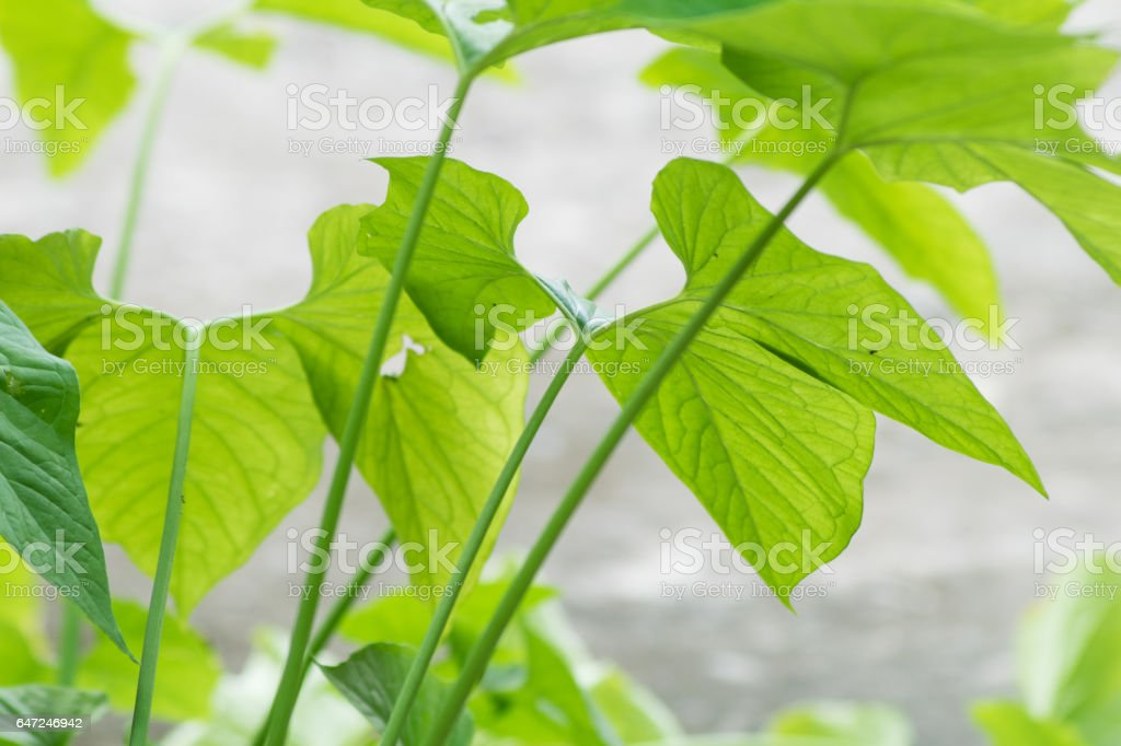 close up green plant leaves stock photo