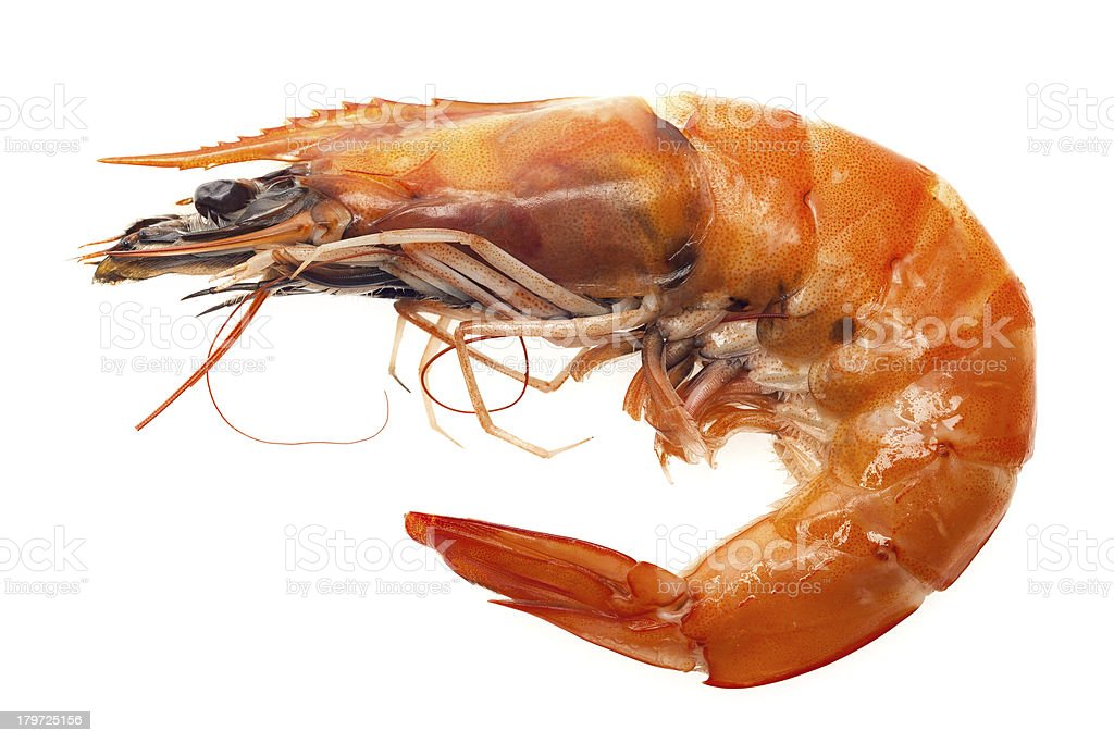 Close up grilled shrimp isolated on white background royalty-free stock photo