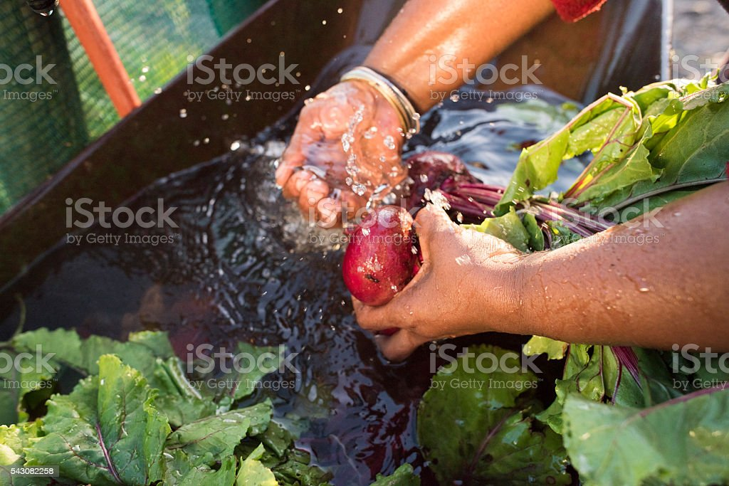 Close up hands African Woman Washing vegetables running water stock photo