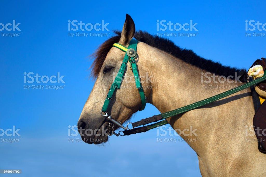 close up horse head at the beach stock photo
