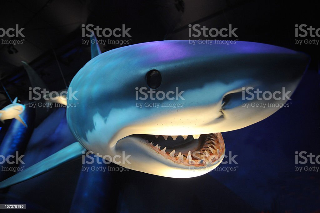 Close up image of a shark showing teeth royalty-free stock photo