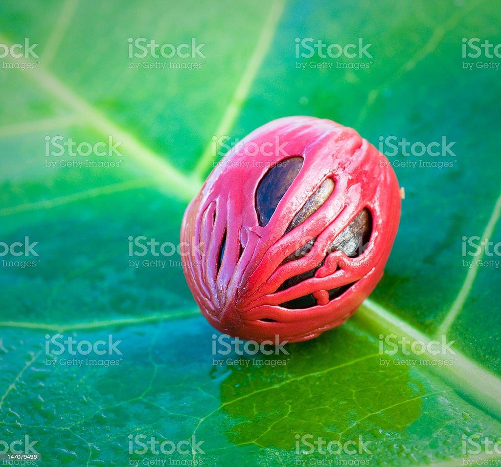 close up image of nutmeg royalty-free stock photo