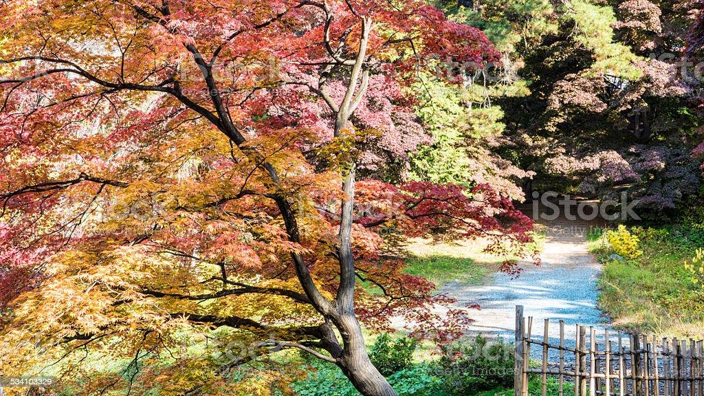 Close up in Hirosaki Castle maple stock photo