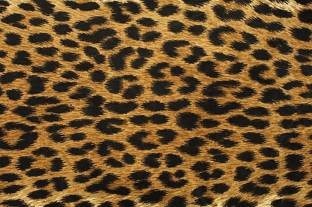 leopardenmuster bilder und stockfotos istock. Black Bedroom Furniture Sets. Home Design Ideas