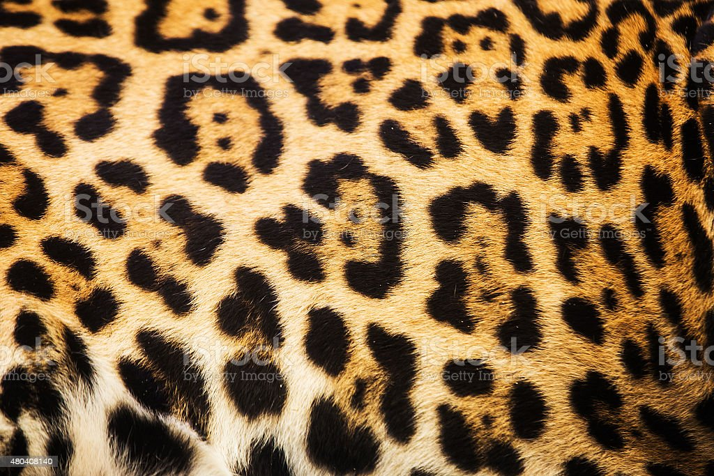 Close up leopard spot pattern texture background stock photo
