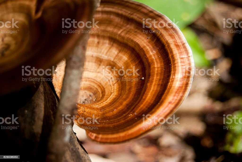 Close up mushroom in the forest, selective focus. stock photo