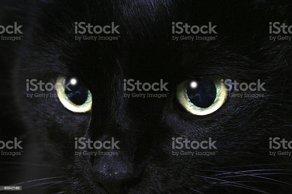 Close up of a black cat's eyes stock photo