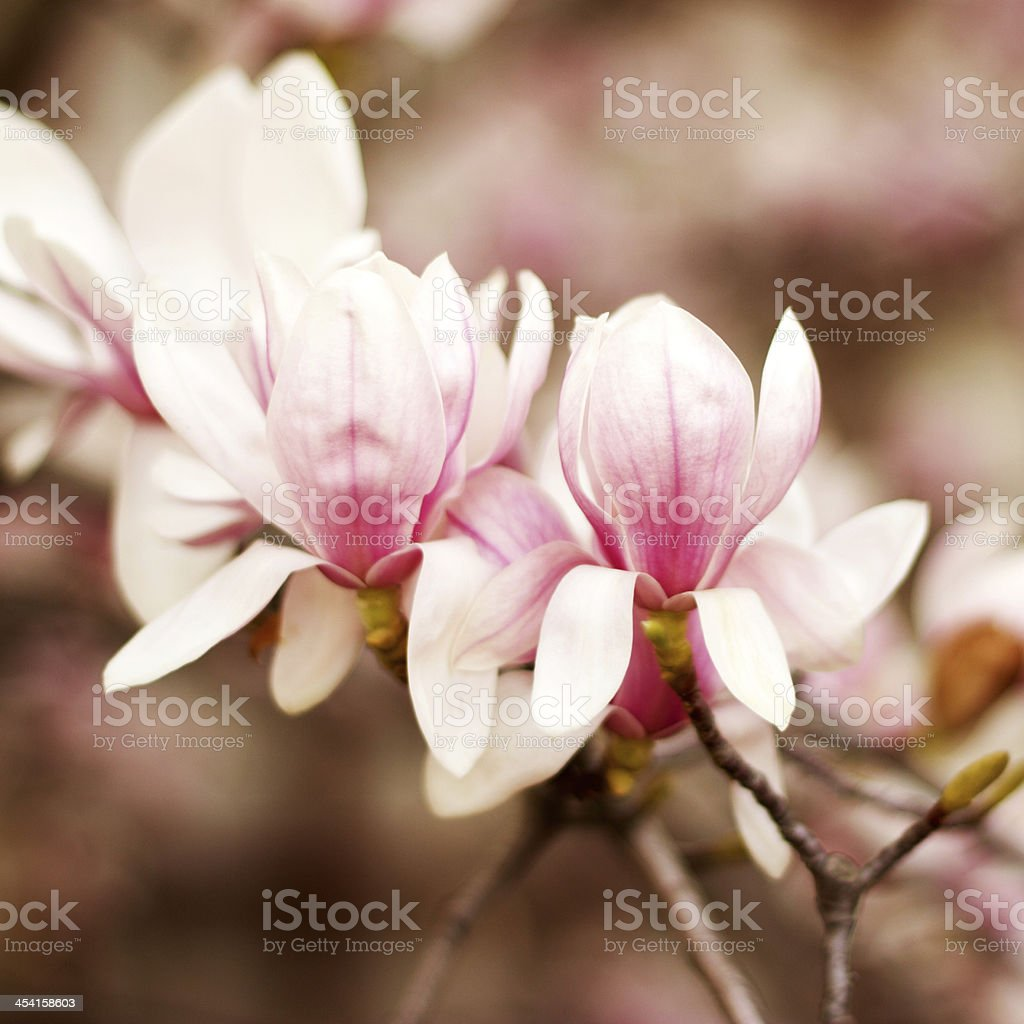 Close up of a branch with flowers royalty-free stock photo