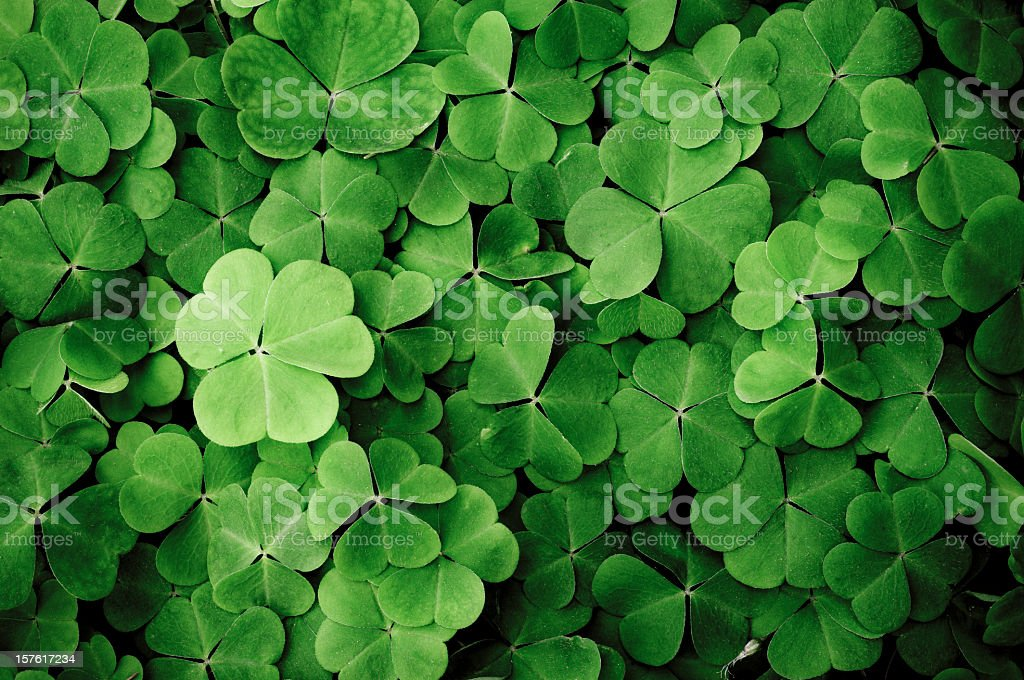 Close up of a bunch of green clover stock photo