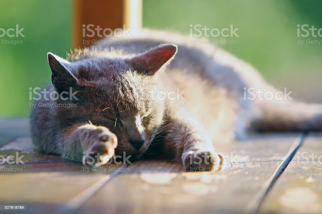 Close up of a cat sleeping on wooden stand stock photo