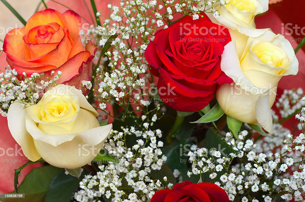 close up of a color roses royalty-free stock photo