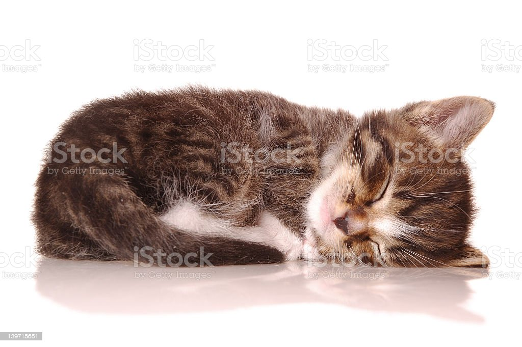 Close up of a cute sleeping kitten royalty-free stock photo