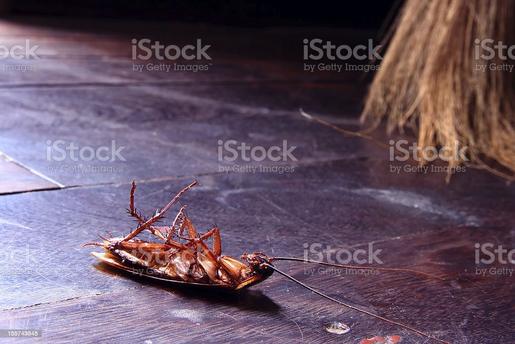 Close up of a dead cockroach on a wooden floor stock photo