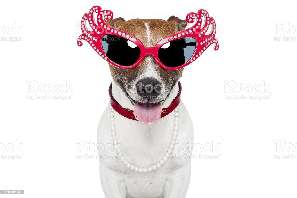 Close up of a dog as a drag queen with huge red sunglasses royalty-free stock photo