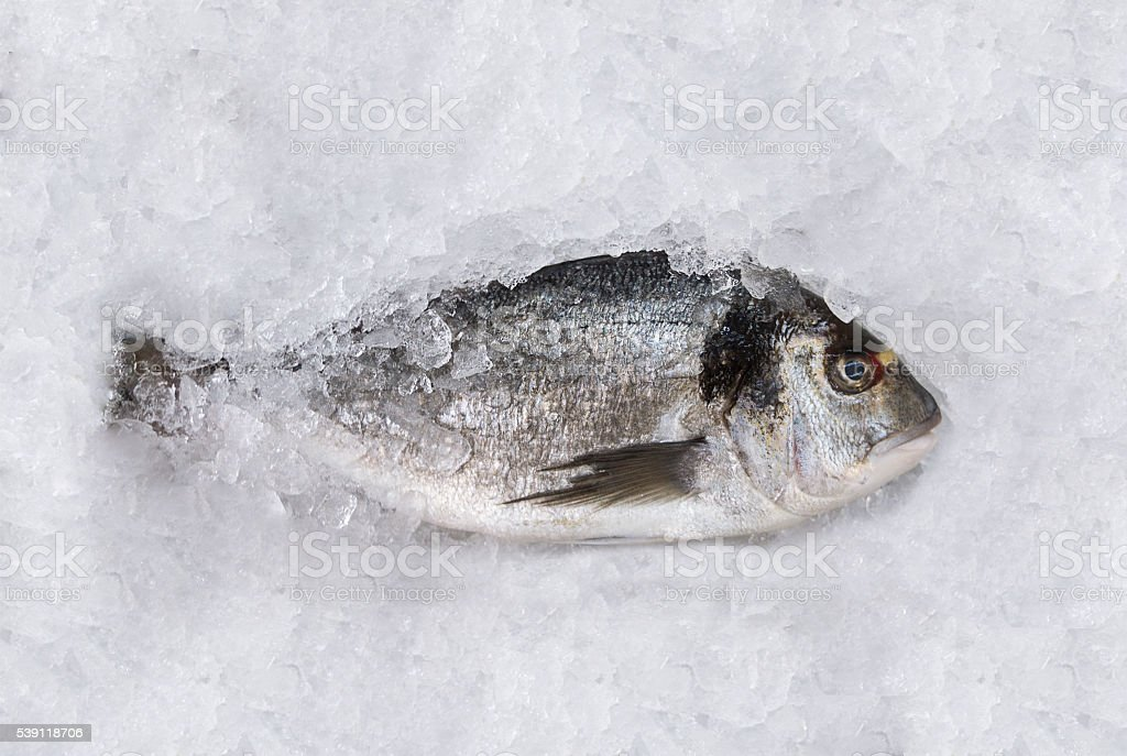 Close up of a dorada fish standing on ice stock photo