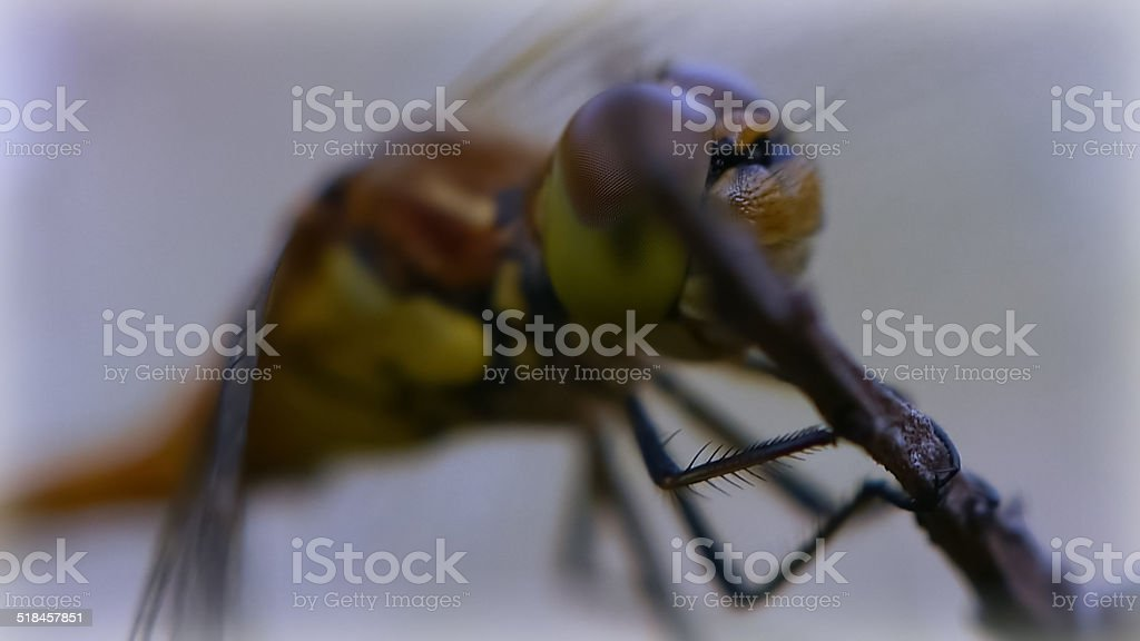 Close up of a dragonfly royalty-free stock photo