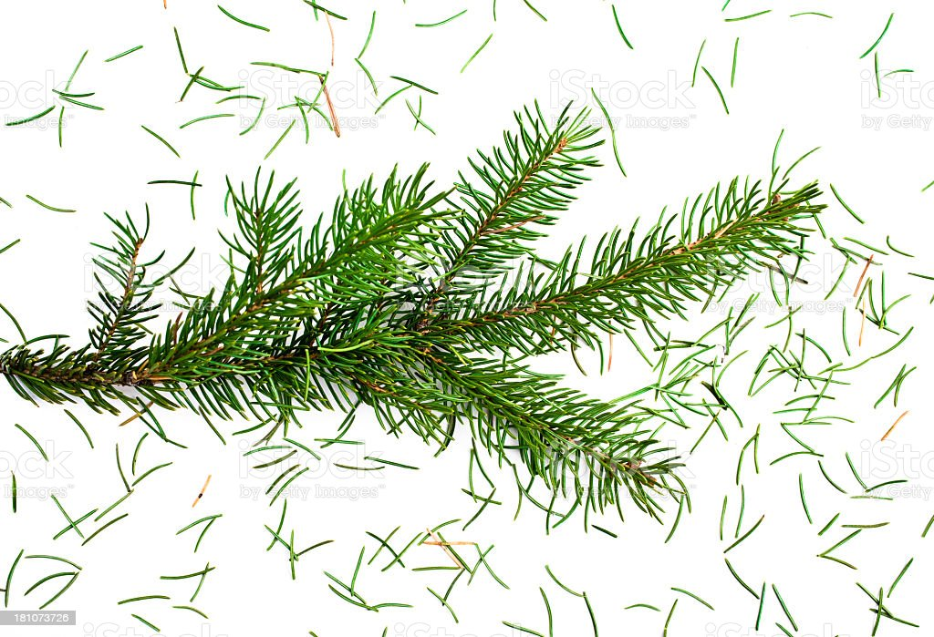 Close up of a fresh Christmas tree losing needles royalty-free stock photo