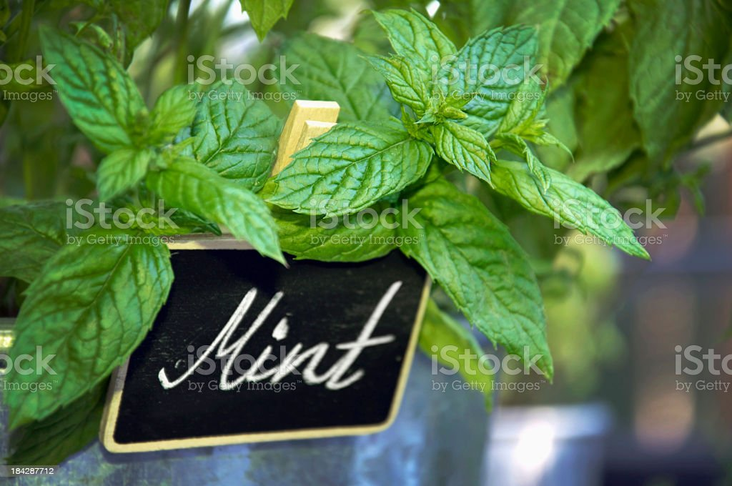 Close up of a fresh mint plant and sign stock photo