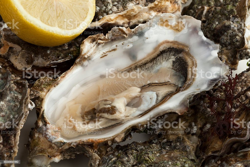 Close up of a fresh raw pacific oyster stock photo