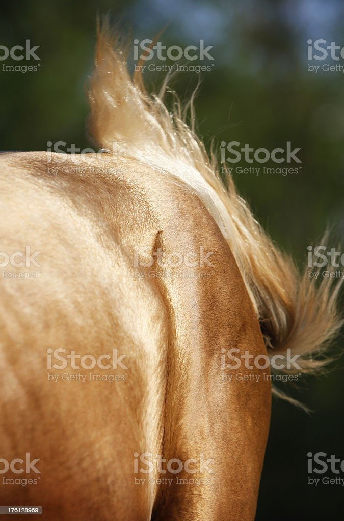 Close up of a golden horse coat stock photo