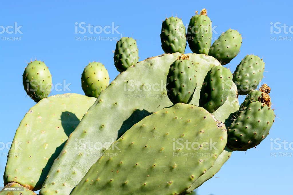 Close up of a green cactus on a blue sky stock photo