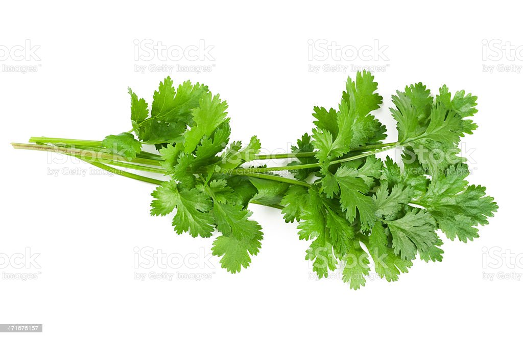 Close up of a green coriander leaf stock photo