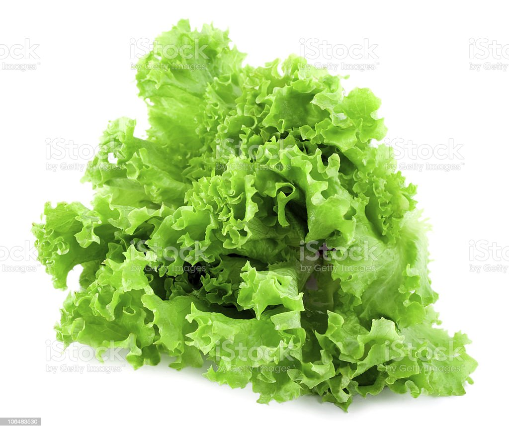 A close up of a green curly leaved lettuce stock photo